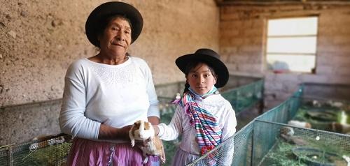Asociación de emprendedoras de Ccayarpacchi reciben 750 cuyes reproductores