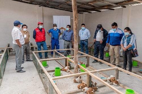 Se dio inicio a la producción y comercialización de cuyes en Quicapata